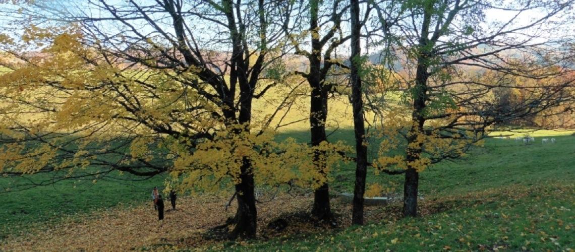 DIAP2-06-Lacoux arbrevisionnaireOK