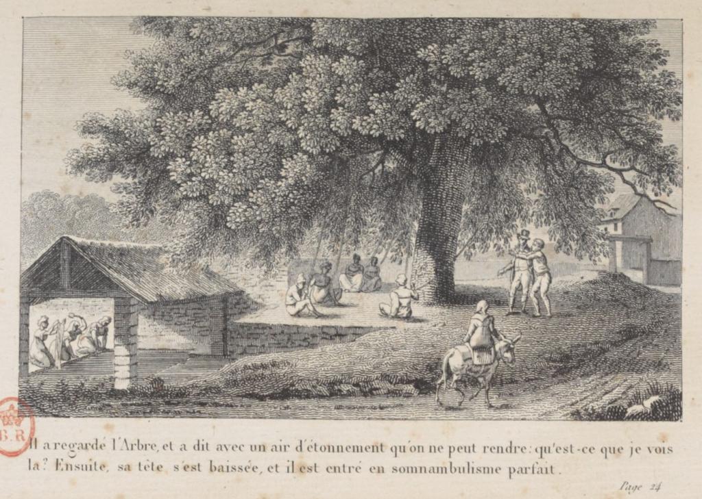 L'orme du marquis de Puységur en 1784